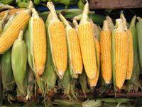 819205_corn