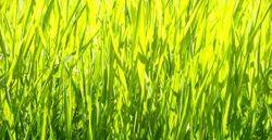 1000688_sunny_grass